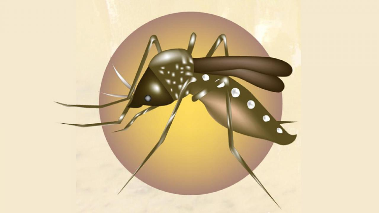search-Research: Mosquitoes should prevent dengue by Rahul Gokhale