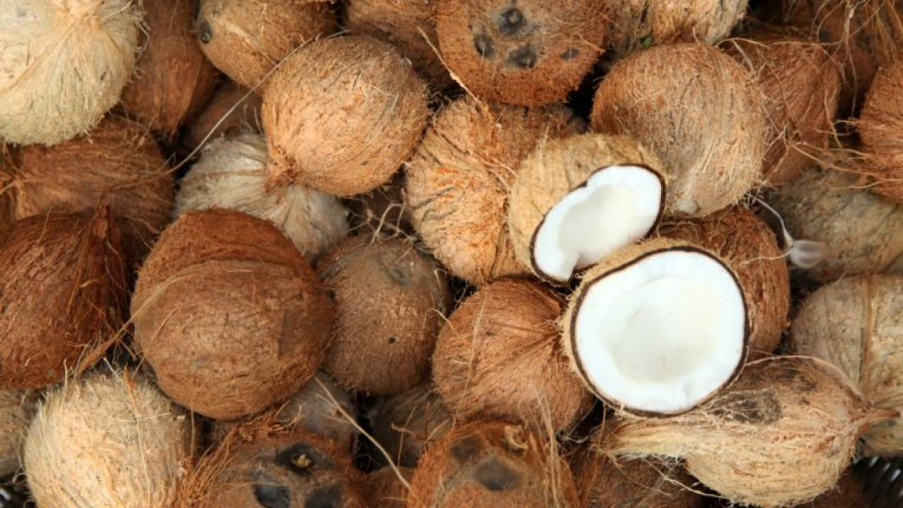 Support price of ripe coconut announced by Central Government