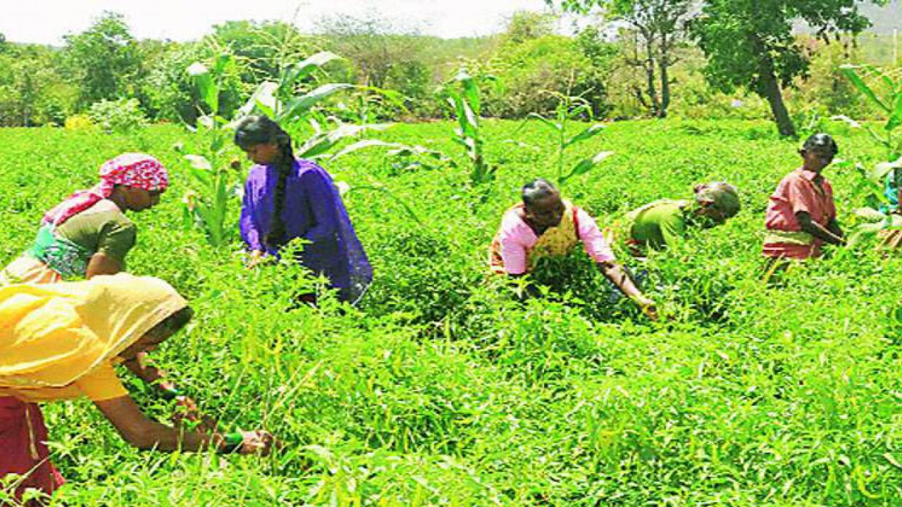 Women in rural areas should become self reliant by getting more and more produce in horticulture
