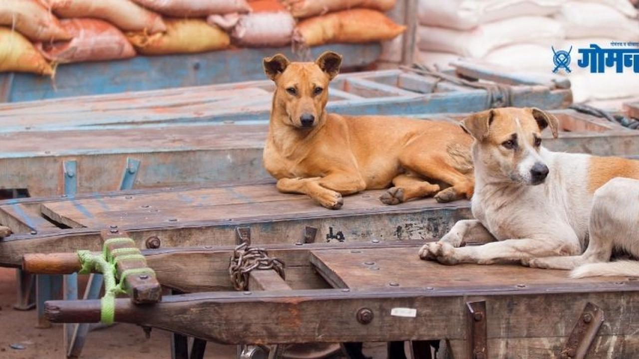 Dogs in Pakistan have led to the suspension of main opposition PPP assembly members