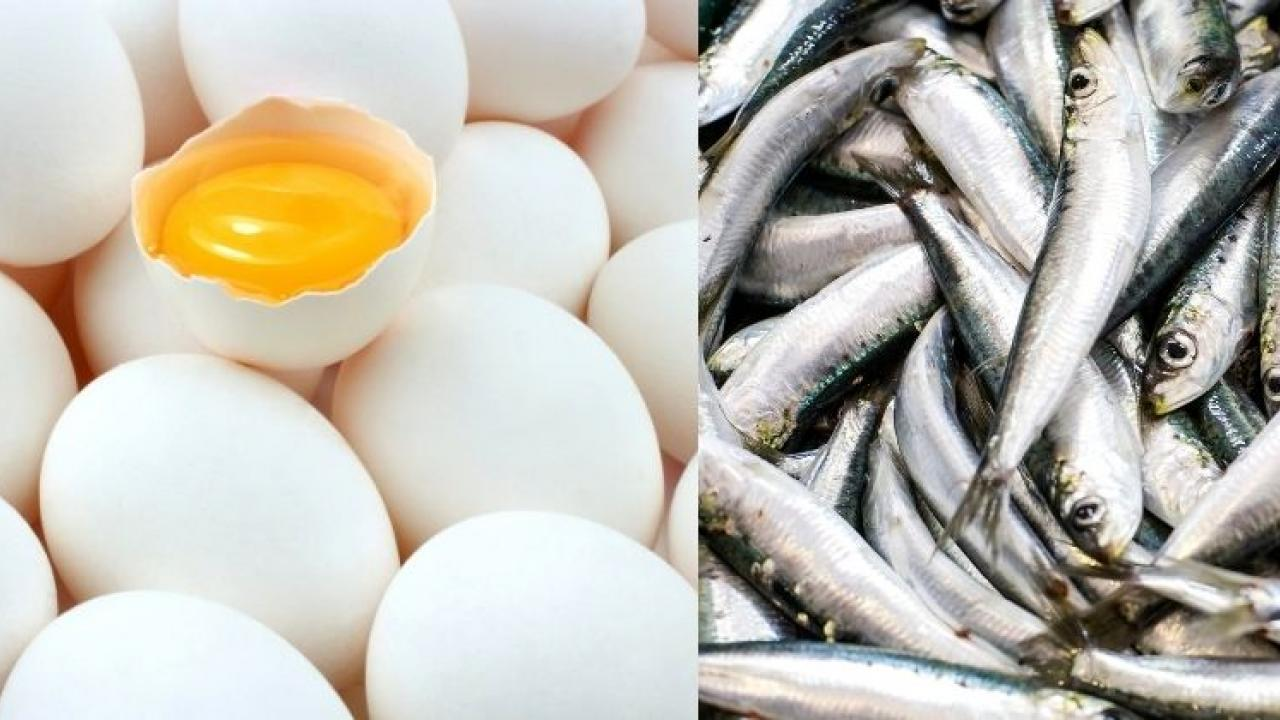 Eggs are in high demand due to high fish price in bicholim