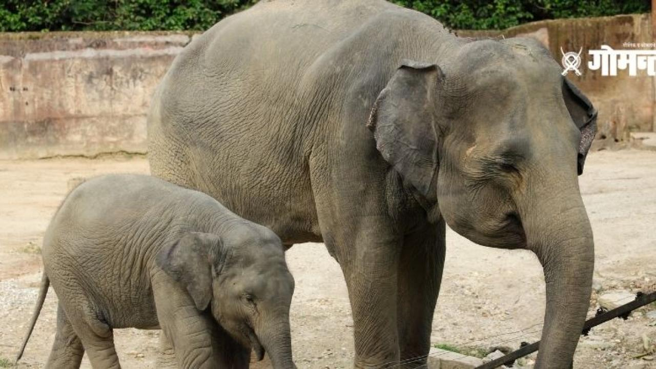 Pregnant elephant kills a zoo worker in Spain