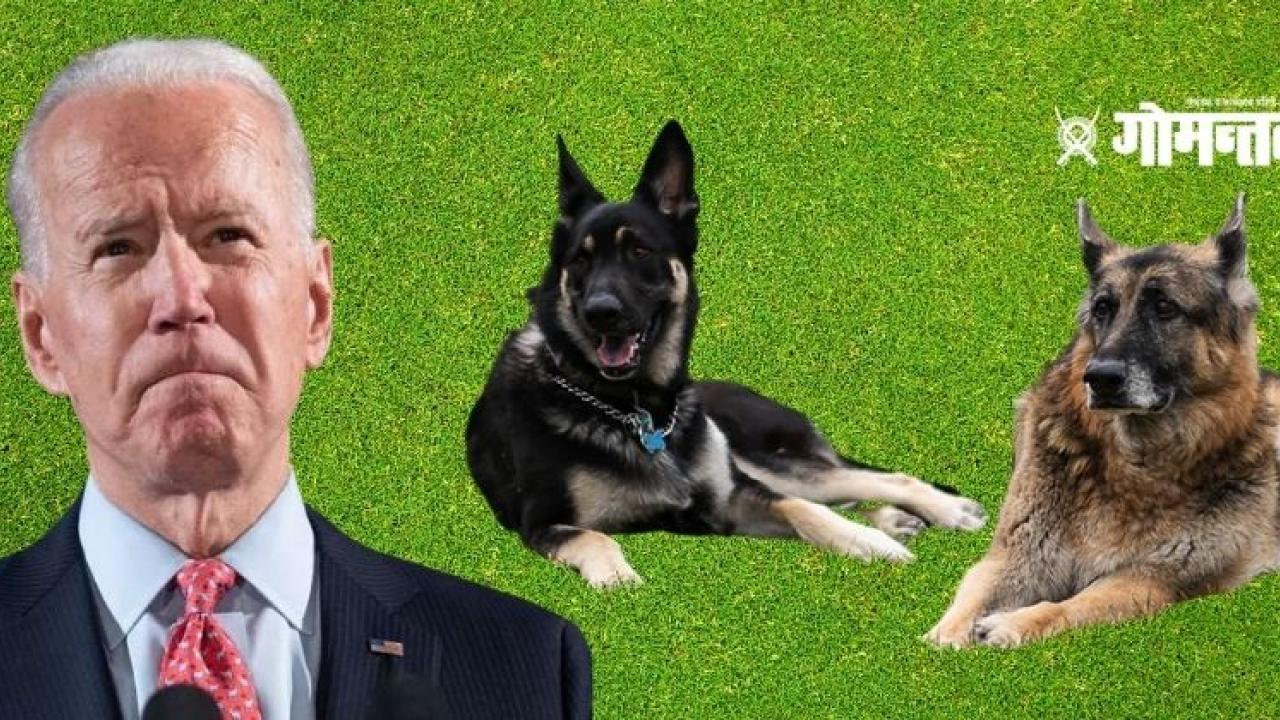 US President Joe Biden dog Major and Champ Attack on Security Service Agent