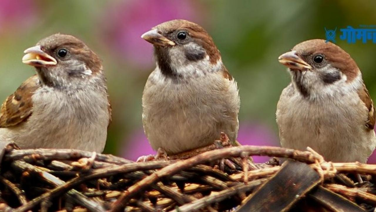 World Sparrow Day 2021 The theme of World Sparrow Day 2021 is I Love Sparrow