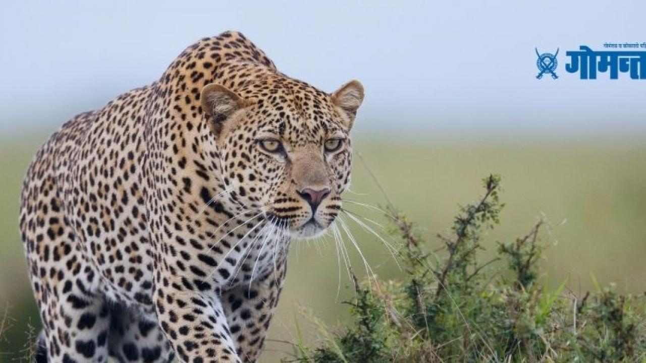Man from Karnataka killed leopard as it attacked his family