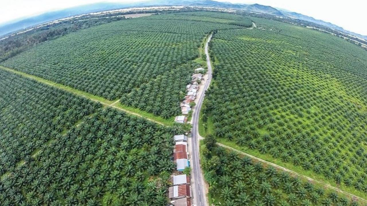 Opportunities for new employment and organic products due to Indian palm industry