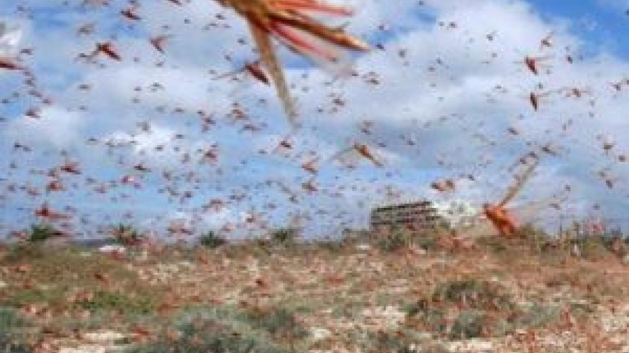 HIL (India) will supply pesticides to Iran for locust control