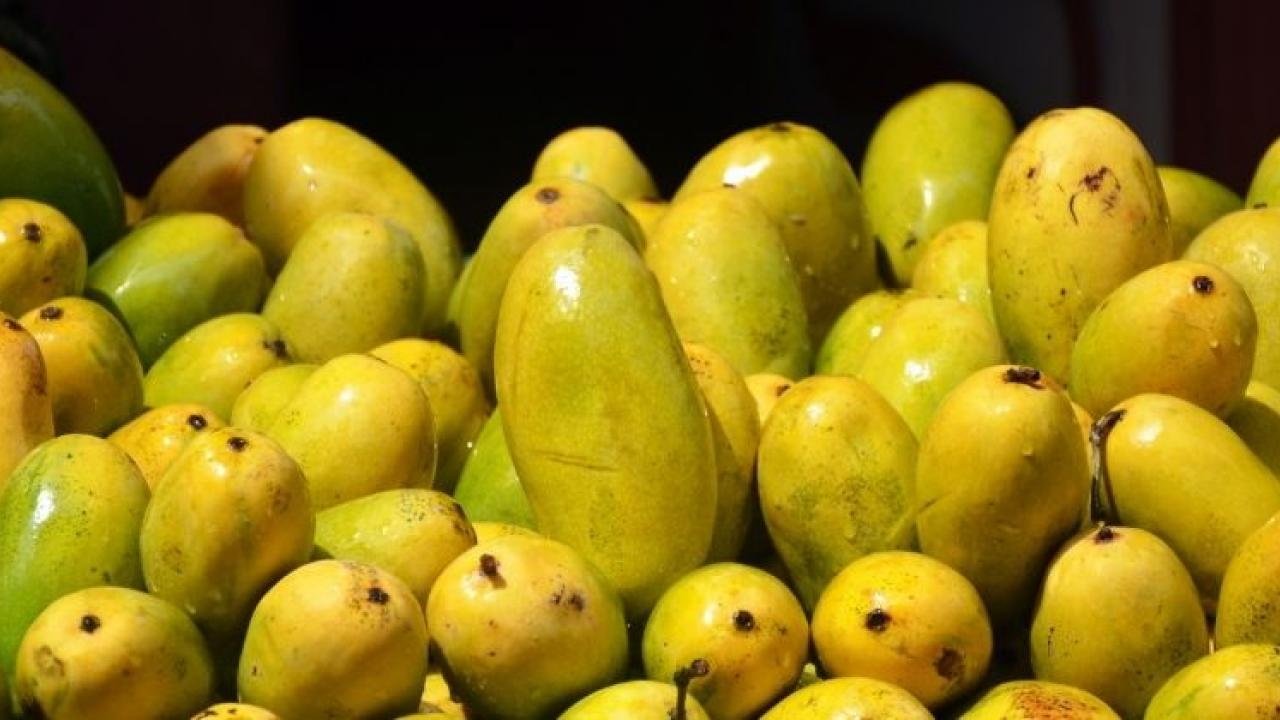 In Goa, mango prices are low but purchases are low