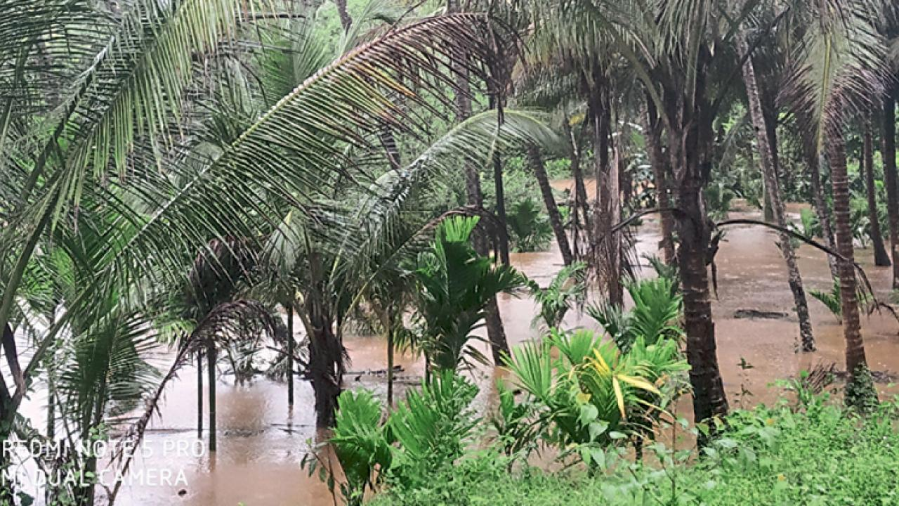 Goa: Heavy rain shower lashed Sanguem vegetable crops, farmers worried