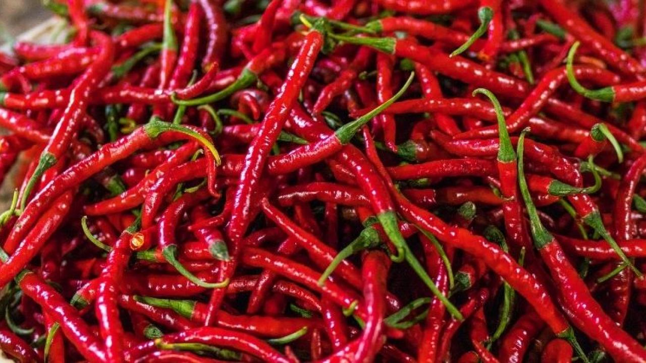 Morjim Chilli Rate.jpg