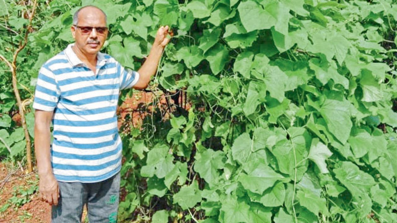Kudne teacher Santosh Malik has grown a variety of leafy vegetables