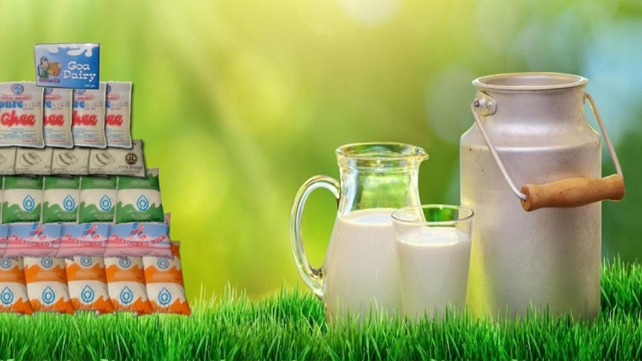 27 thousand 650 liters of milk wasted Of Goa Dairy