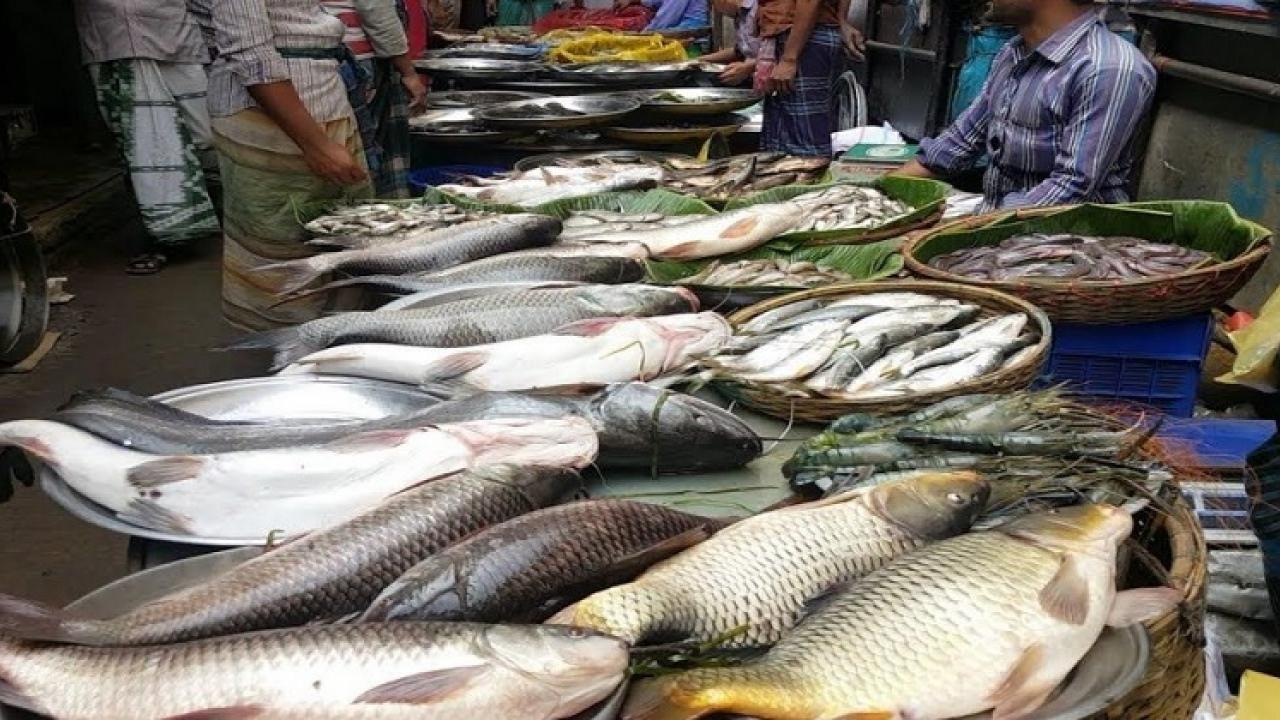 Illegal fish sales at Malim Beti jetty
