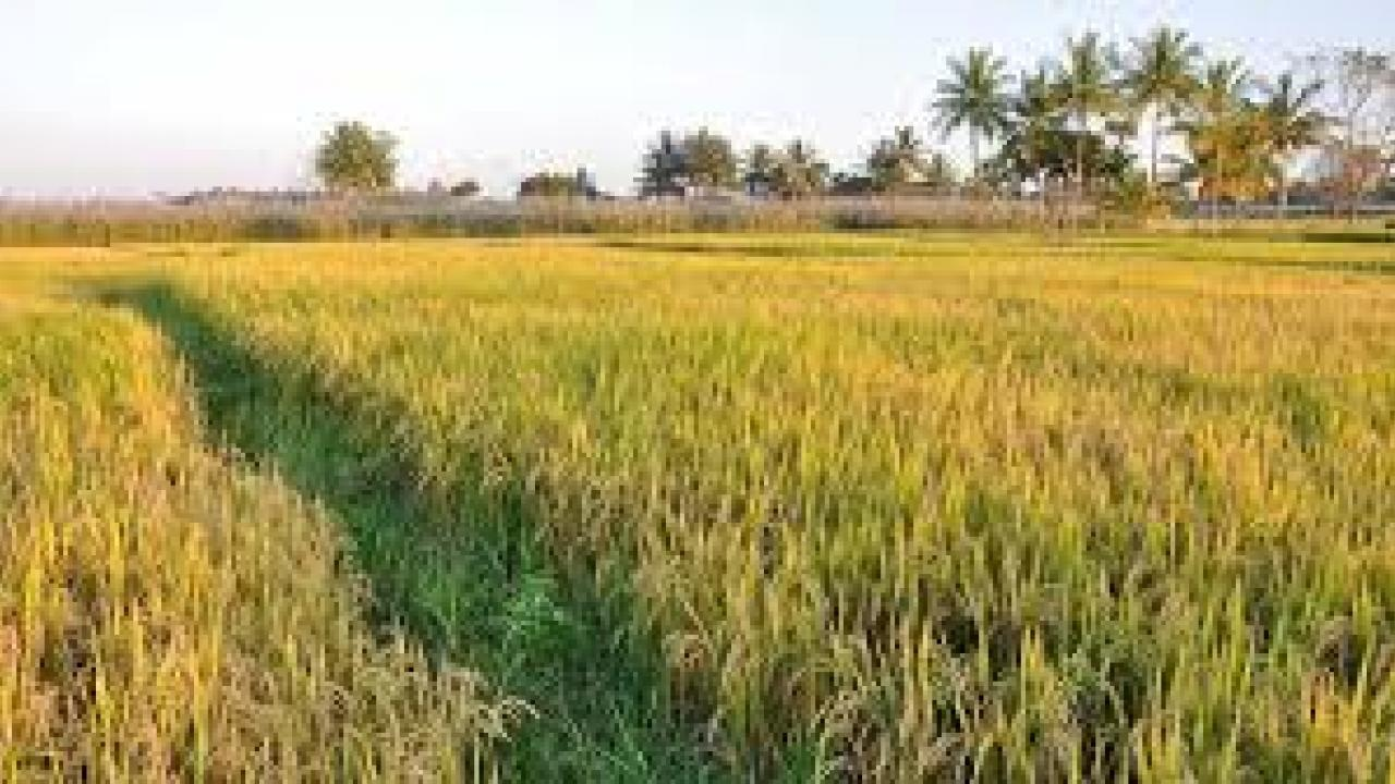 Farmers in Talgaon area are worried