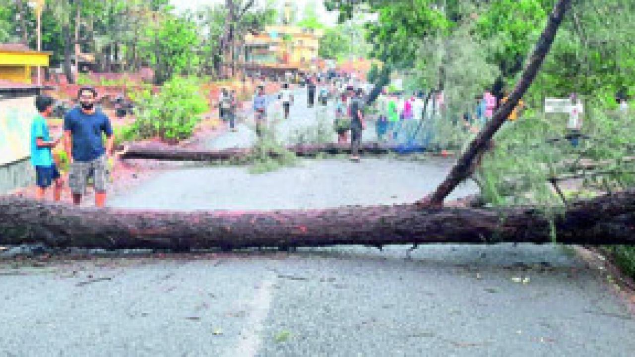 tree falled on road