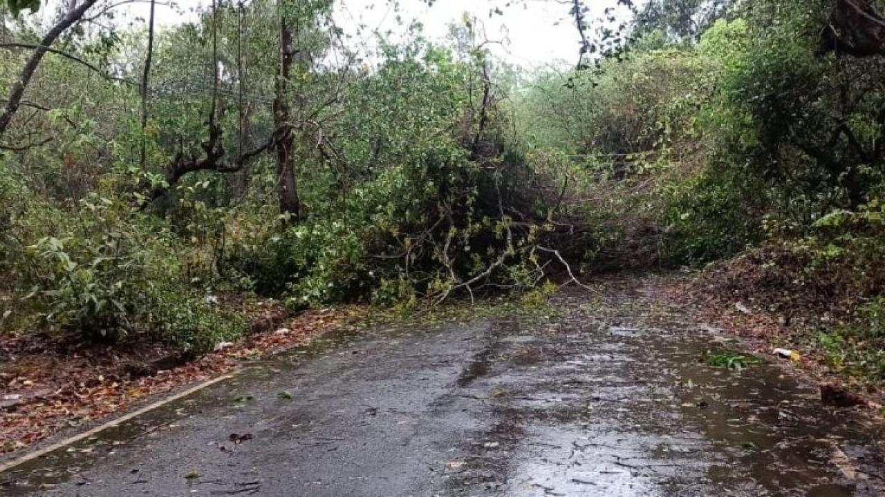 Cyclone Tauktae lashes Goa: Cyclonic storm hits coastal state