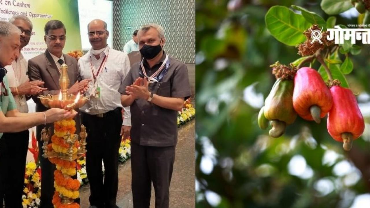 Two days National Cashew Convention begins in Panaji
