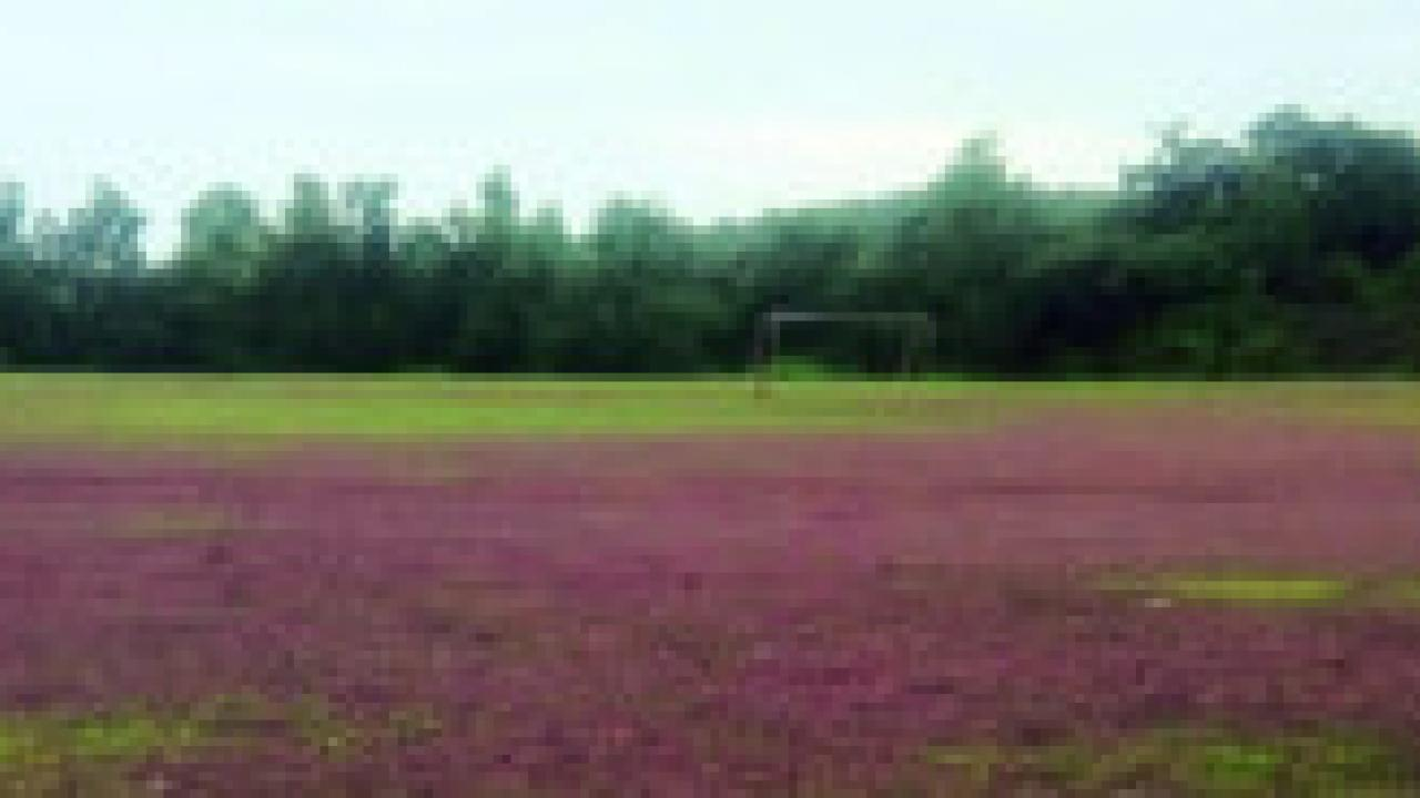 canacona ground