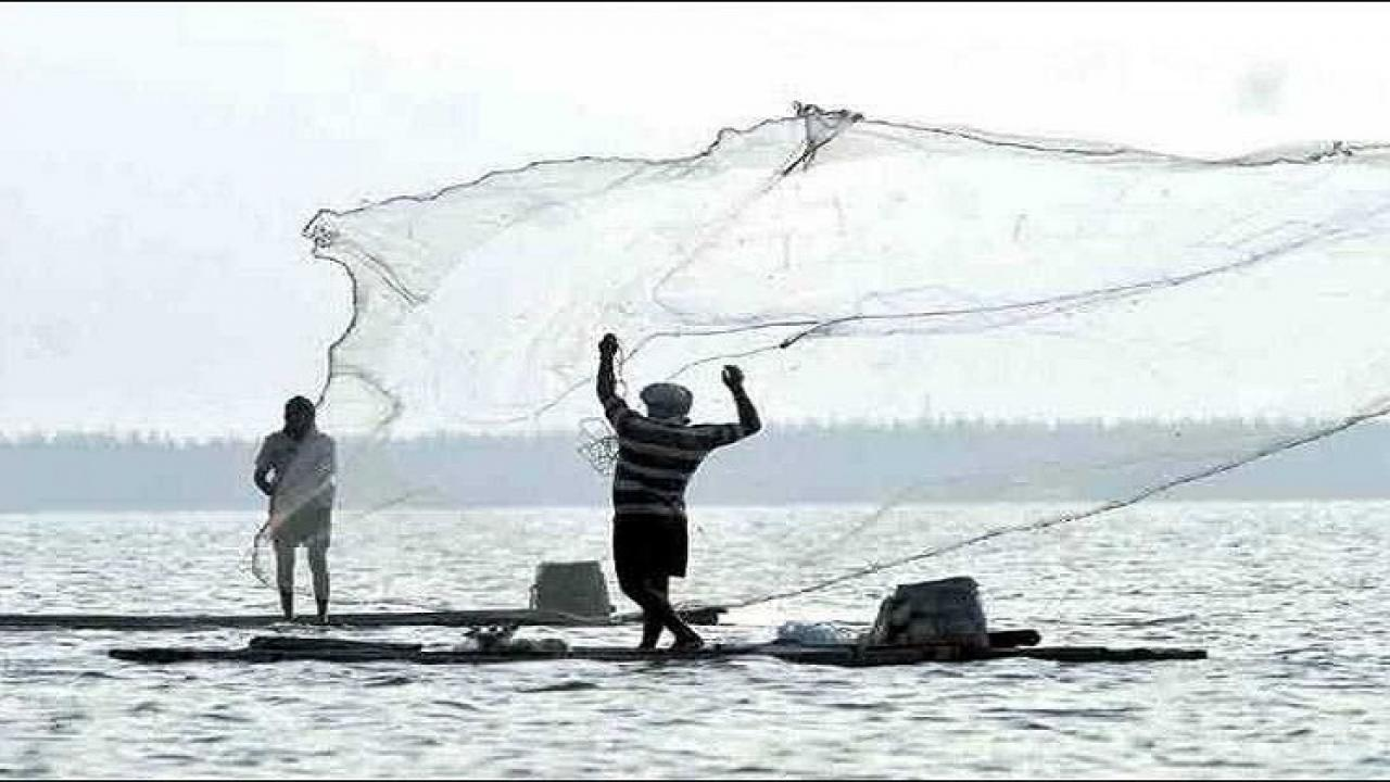 Ban on LEDs in fishing; Bull trawling