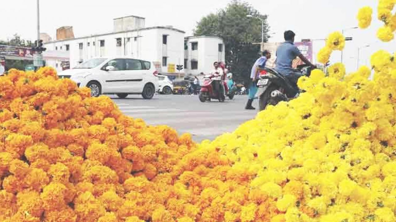 Marigold in Dicholi costs Rs 180!