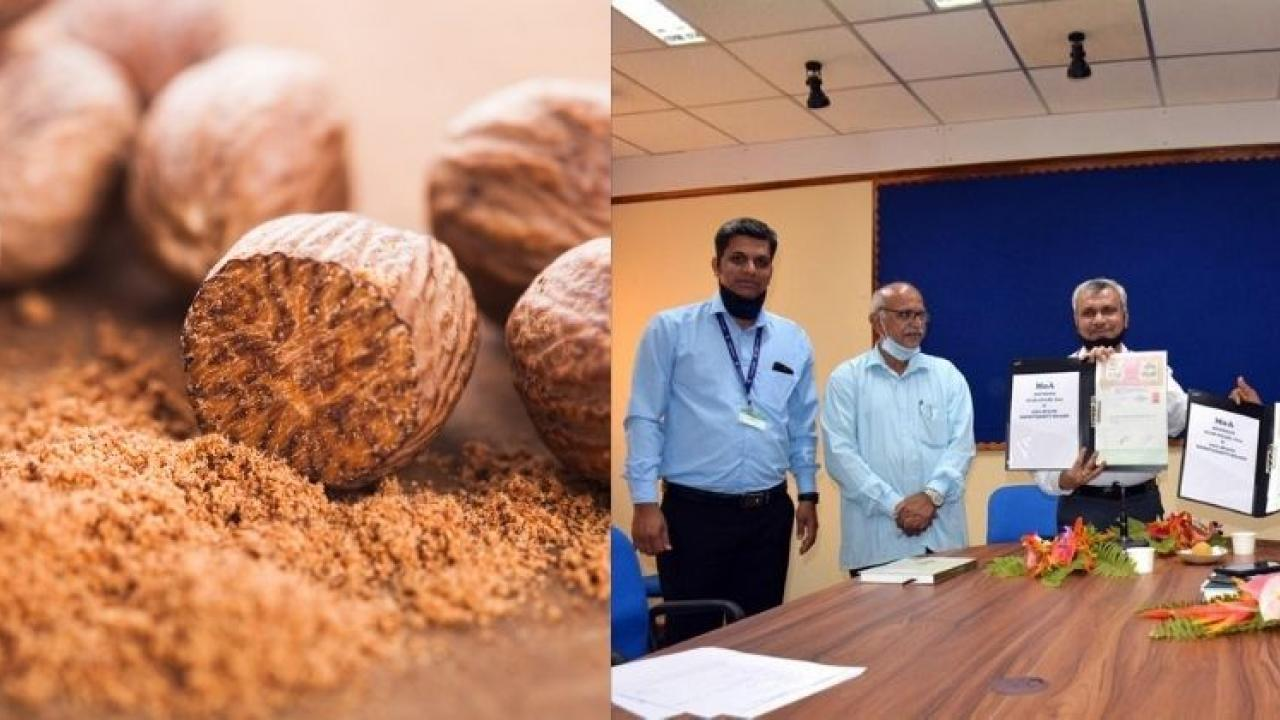 ICAR CCARI technology in nutmeg fruit toffee production process will be commercialized
