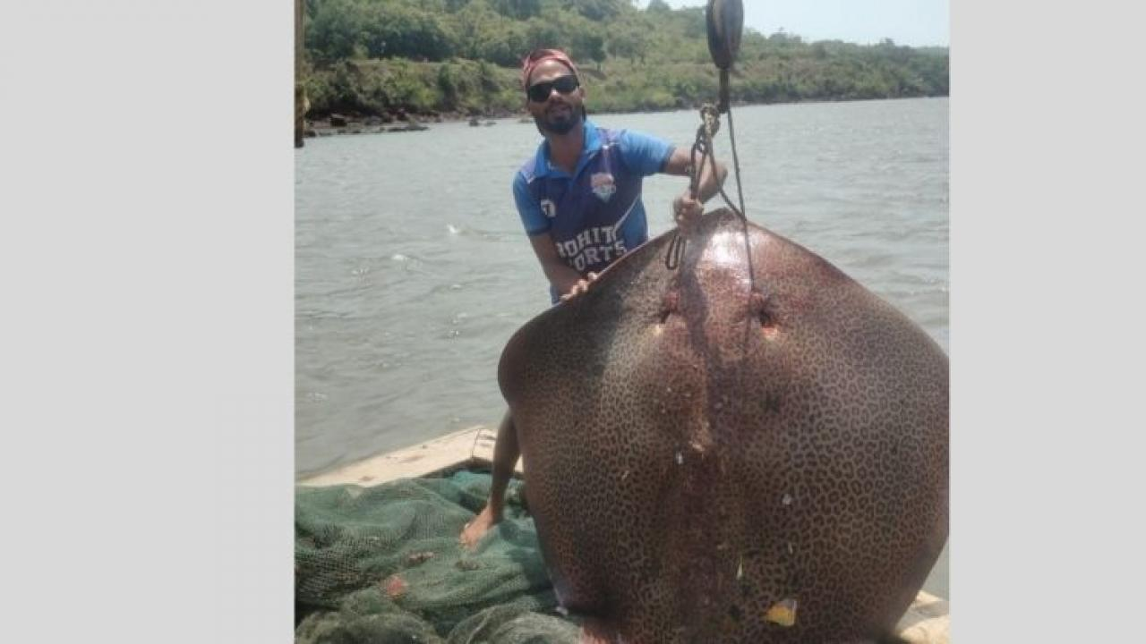Aishappath  A fish weighing 150 kg was found in the net