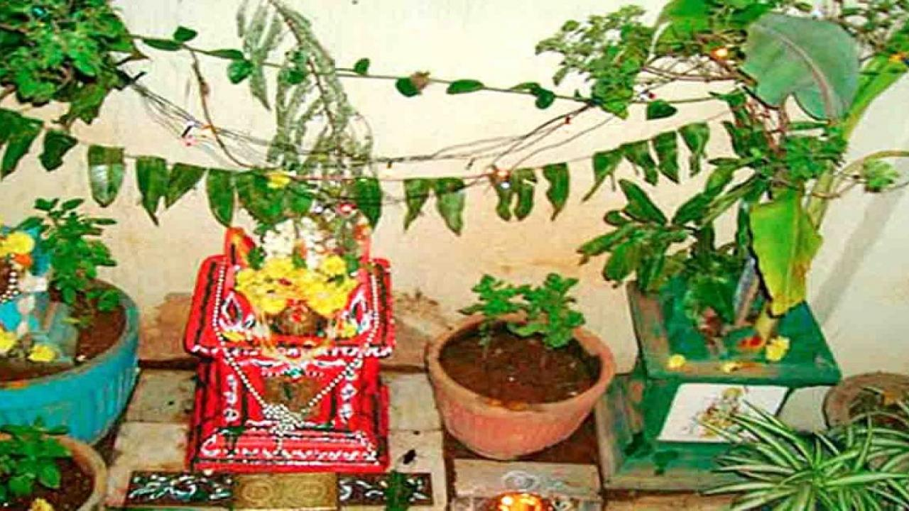 Tulsi wedding on Kartik full moon in Goa