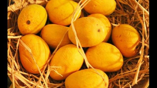 The mango will be in the market by the end of March