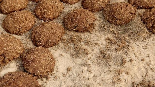 cow-dung-cakes
