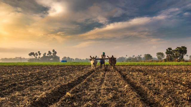 FACT made a profit by providing essential agricultural nutrients