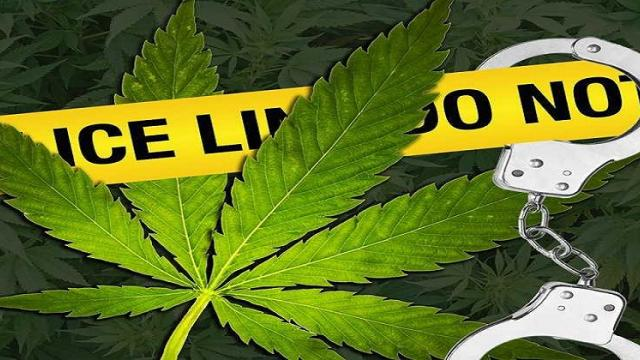 Demand to curb the demand to legalise the cultivation of cannabis in Goa