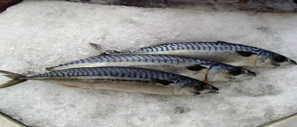 The highest export of Ice fish was Rs 288 50 crore