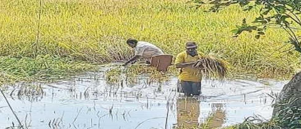Cultivation work has started for Wayngan farming