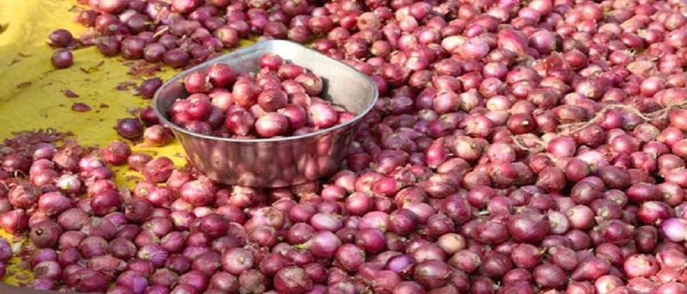 Onion horticulture at affordable rates Available at Stall: Amonkar