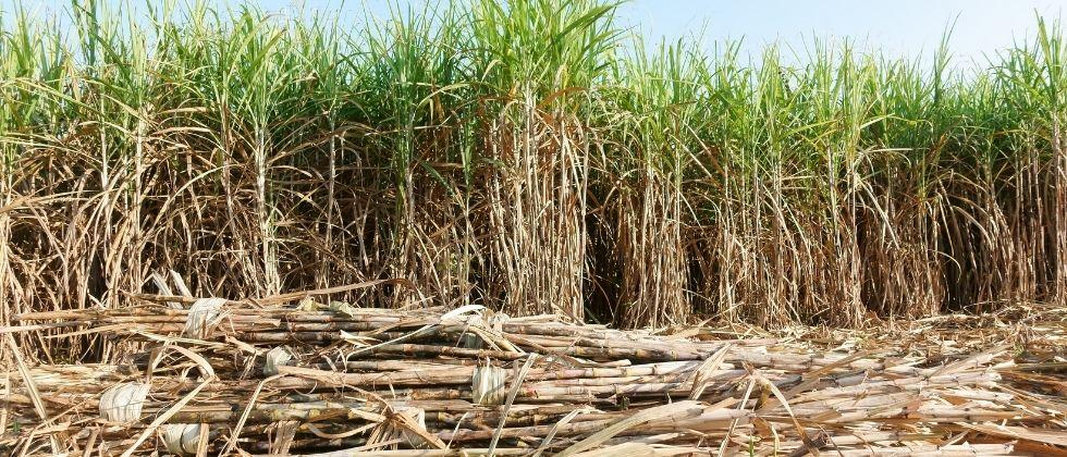 Goa Forward alleges no efforts by Goa government to start Sanjeevani Sugar Factory