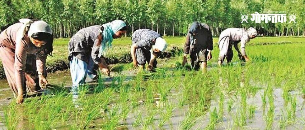 Rice Cropping