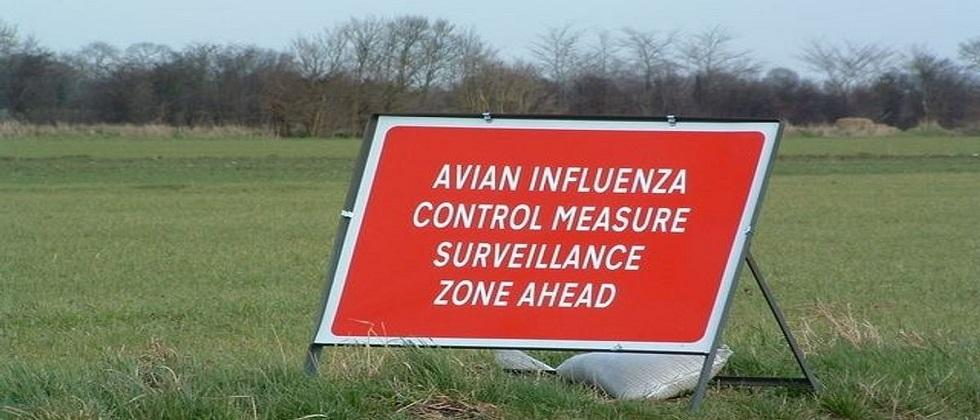 The Kerala government confirmed an outbreak of avian influenza  ducks have died during the last 10 days