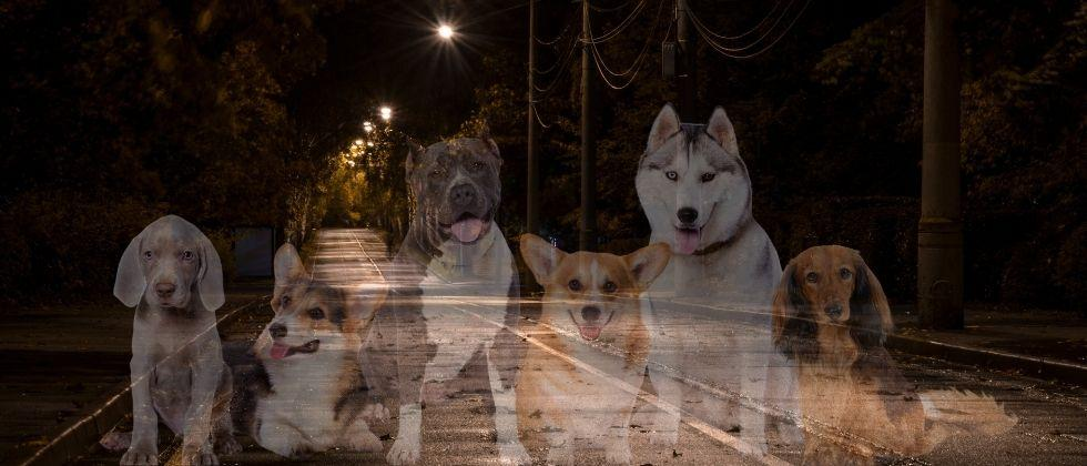The growing number of dogs in Fonda has become a major complication