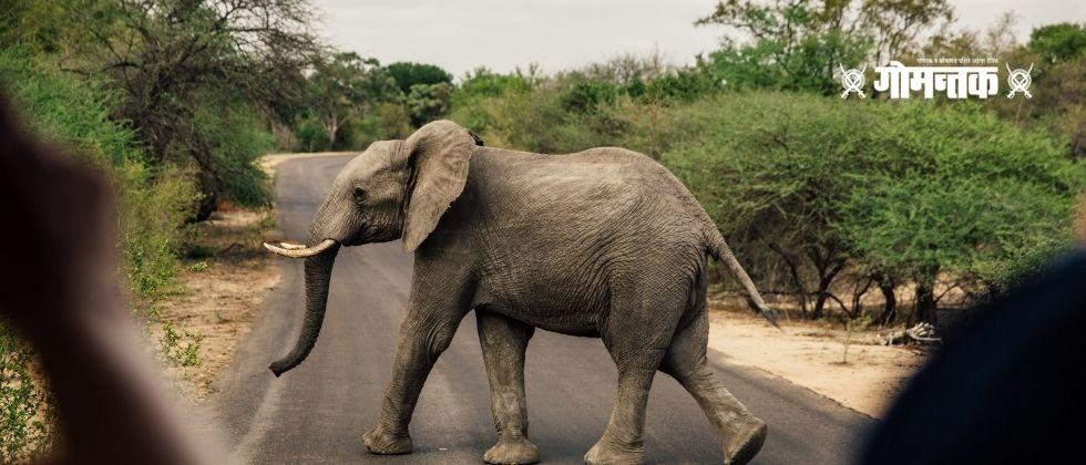 Video Viral Panic of tourists when angry elephant ran towards the bus