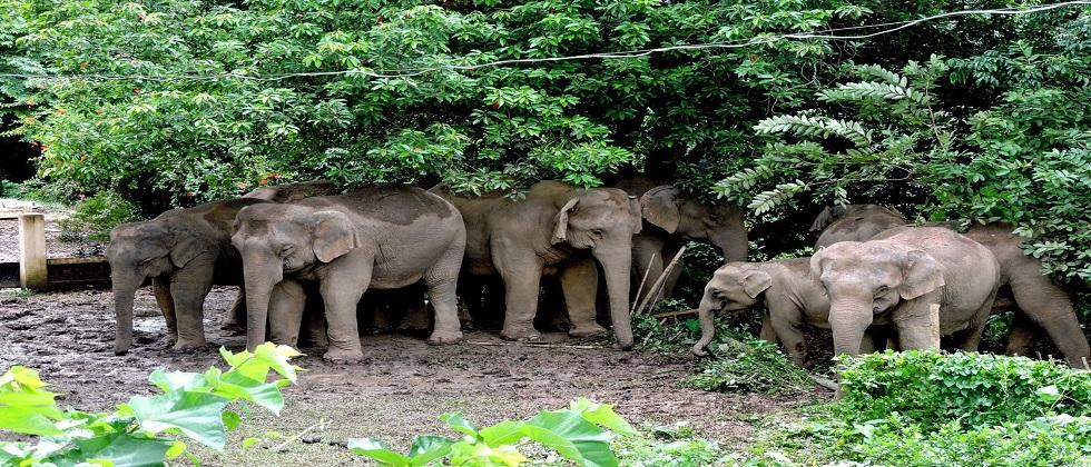 A Goa bench of the Bombay High Court has ordered an inquiry into the 10 elephants within two months