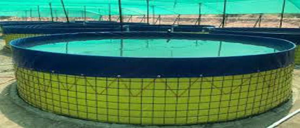Experiments have been started to produce fish by erecting tanks