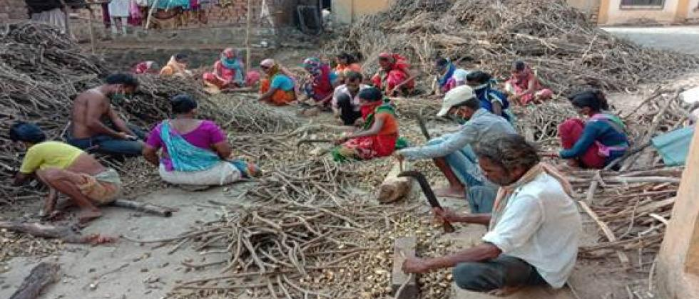 Forests development center in Maharashtra for tribals during the Kovid crisis