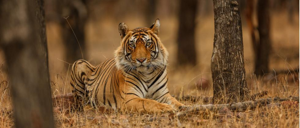What measures should we take in order to save the wildlife