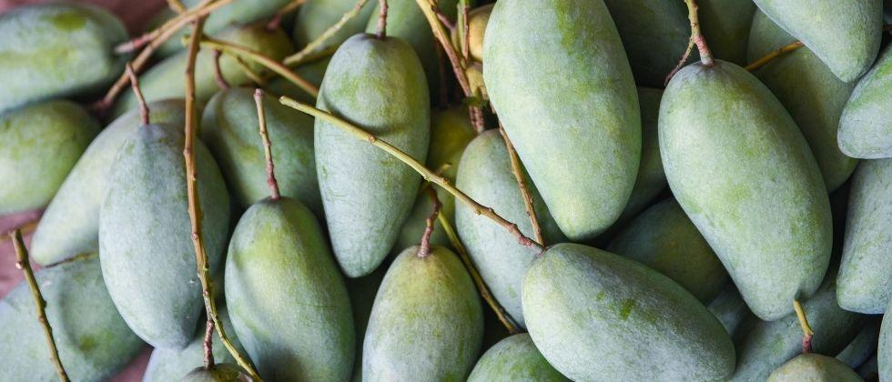 The growing cases of corona have raised concerns among mango growers