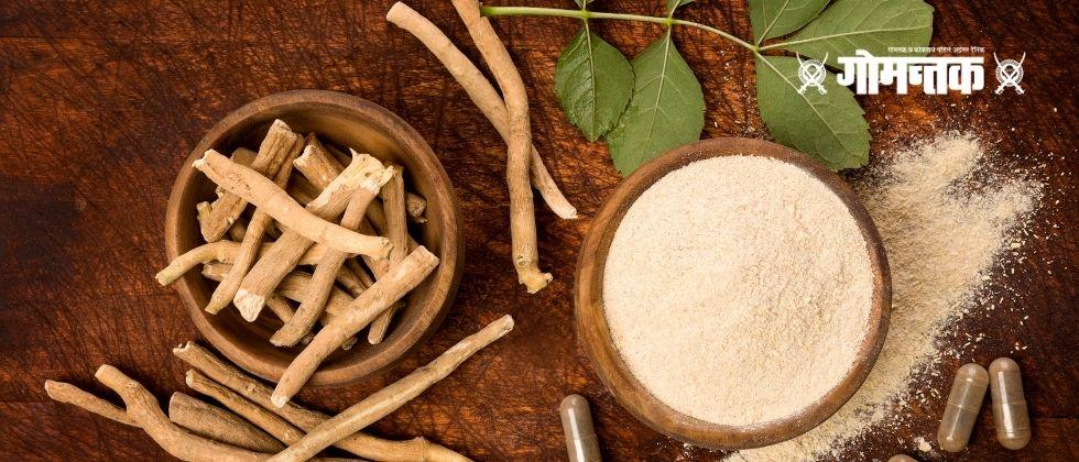 Lets return to our Ayurveda Do you know these healing remedies of Ashwagandha