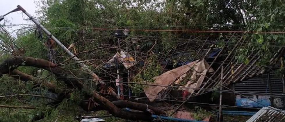 A tree uprooted due to cyclone Amphan in Kolkata. Pic: Twitter