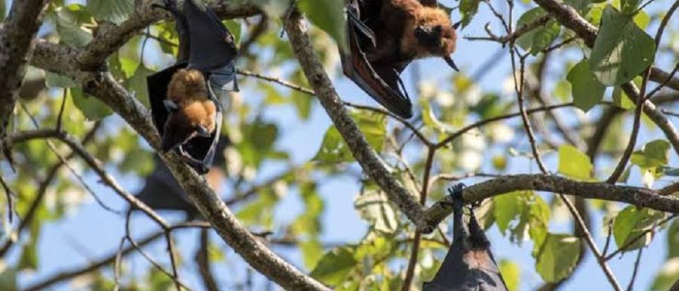 The bats return to trigger Novel Coronavirus outbreak
