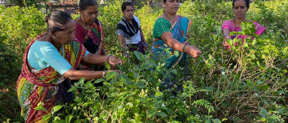 Sarita Polle (fourth from left) harvesting mogra buds along with other women at her plantation in Corjuem