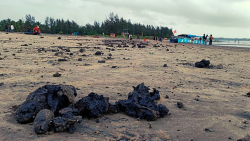 huge amount of greasy tar balls were found deposited at the beach on Saturday, September 11, 2021