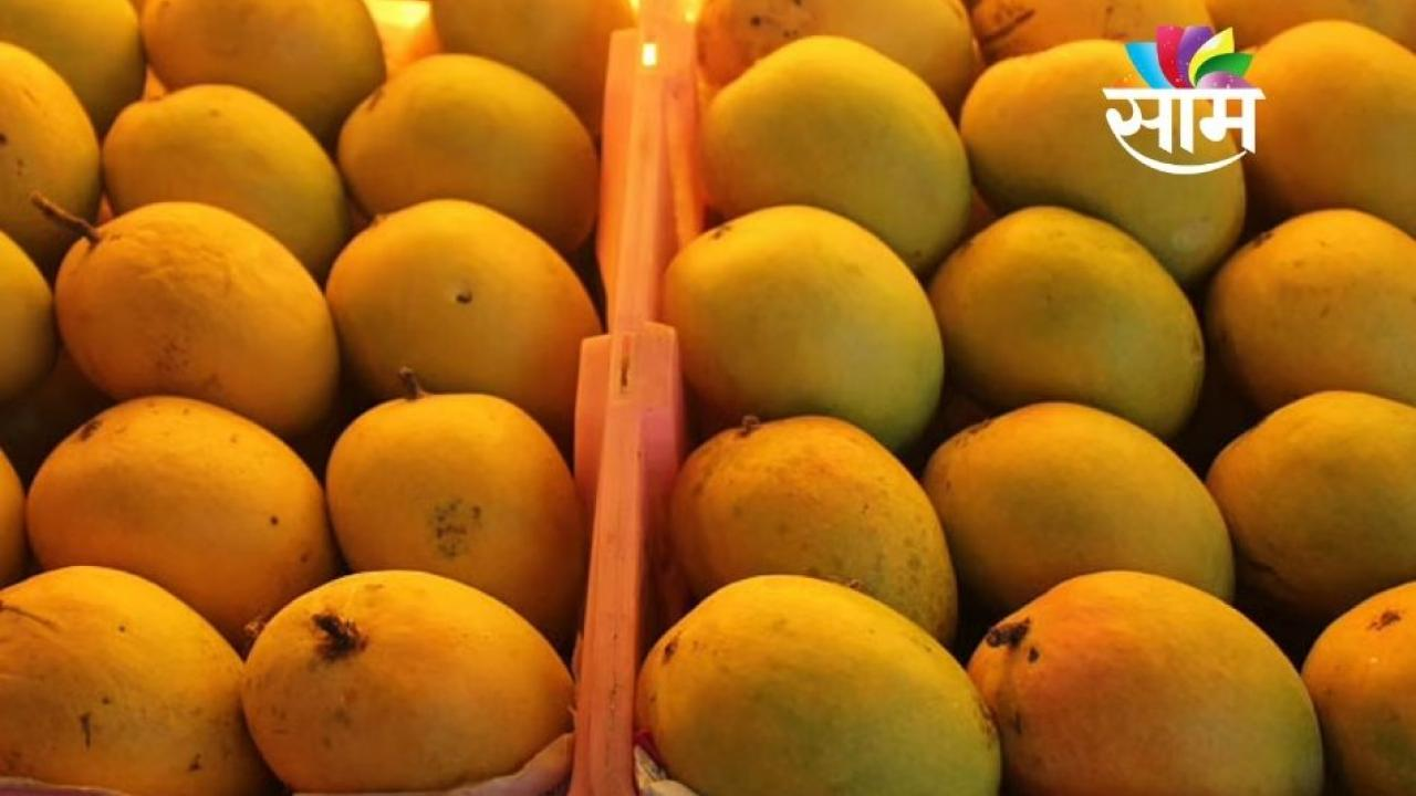 Mango Prices Higher in Mumbai